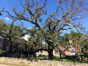 oaktree fall 2015